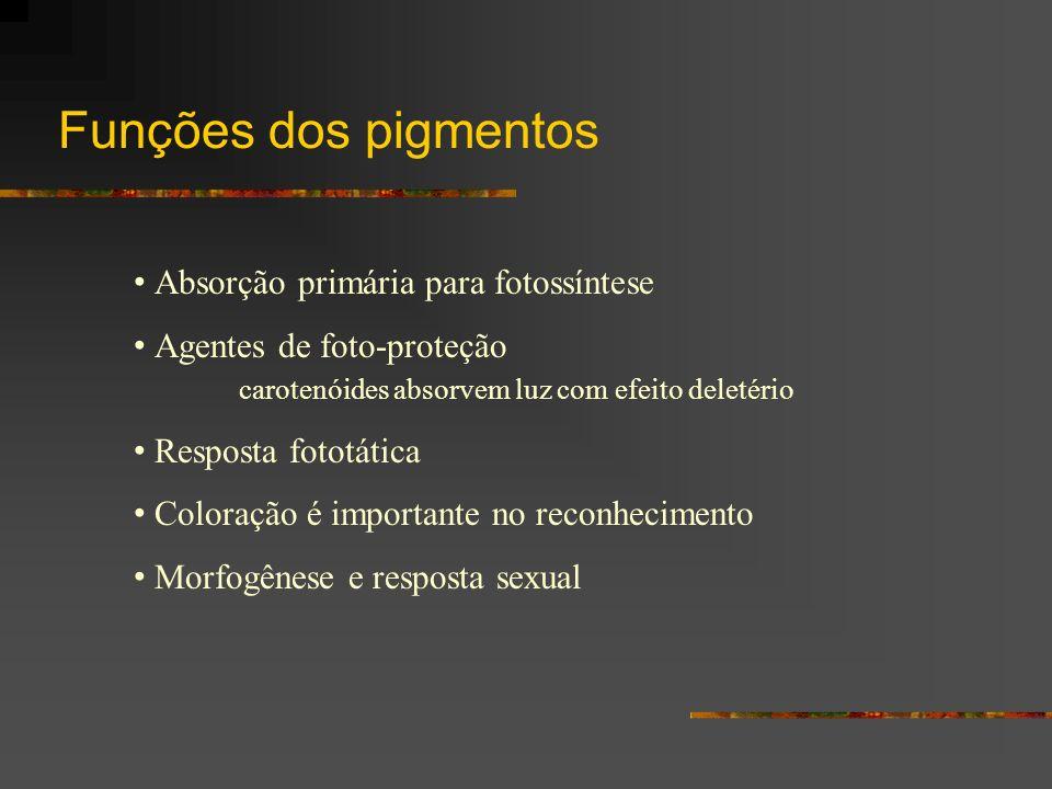 Funções dos pigmentos Absorção primária para fotossíntese Agentes de foto-proteção carotenóides absorvem luz com efeito deletério Resposta fototática