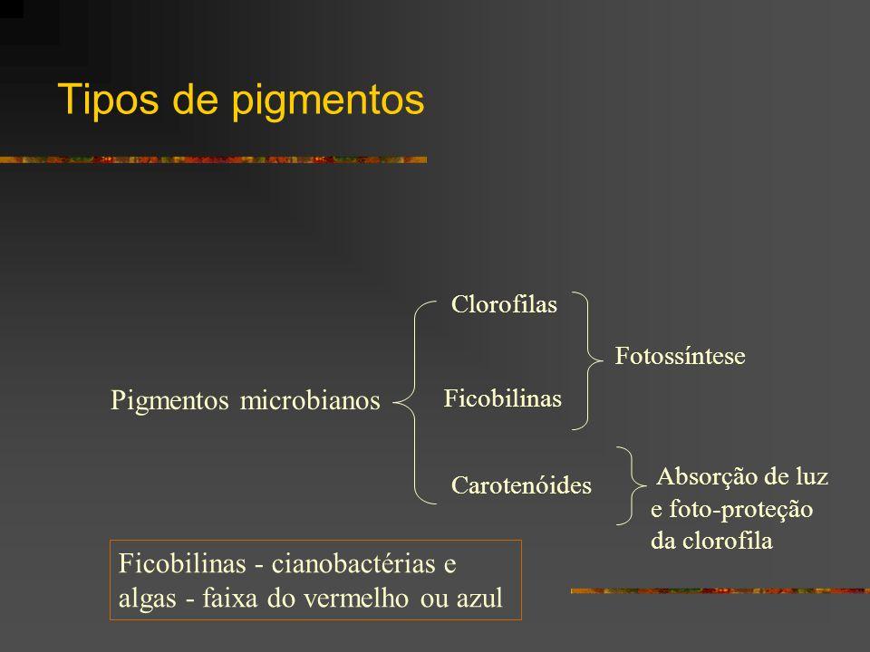 Tipos de pigmentos Pigmentos microbianos Clorofilas Ficobilinas Carotenóides Fotossíntese Absorção de luz e foto-proteção da clorofila Ficobilinas - c