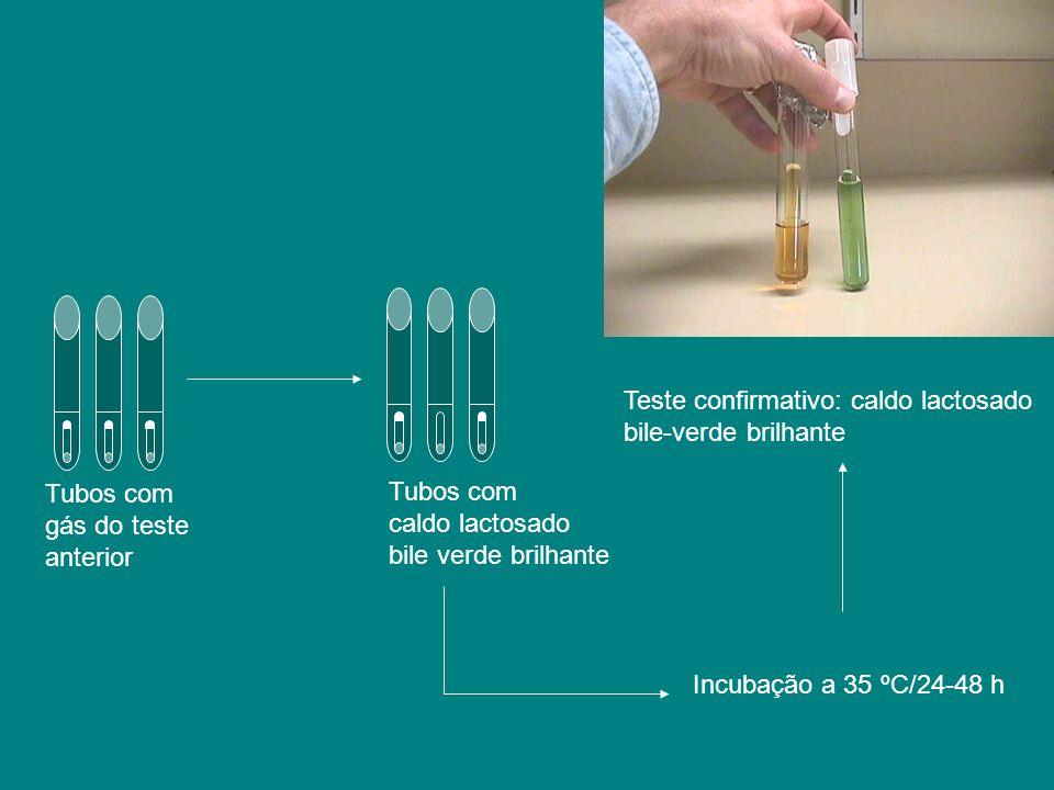 Teste confirmativo: caldo lactosado bile-verde brilhante Tubos com gás do teste anterior Tubos com caldo lactosado bile verde brilhante Incubação a 35