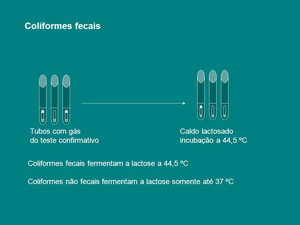 Tubos com gás Caldo lactosado do teste confirmativo incubação a 44,5 ºC Coliformes fecais Coliformes fecais fermentam a lactose a 44,5 ºC Coliformes n