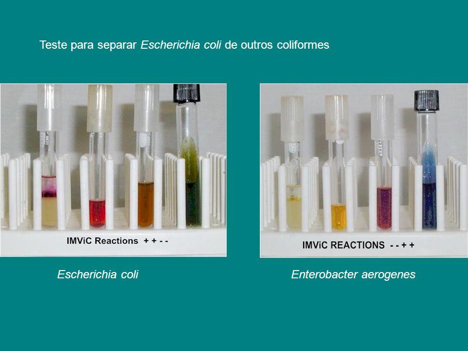 Teste para separar Escherichia coli de outros coliformes Escherichia coliEnterobacter aerogenes