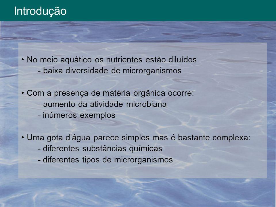 Introdução No meio aquático os nutrientes estão diluídos - baixa diversidade de microrganismos Com a presença de matéria orgânica ocorre: - aumento da