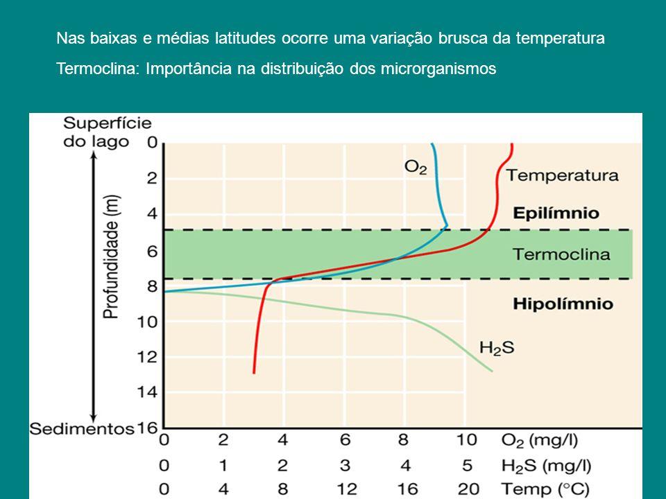 Pressão hidrostática –pressão no fundo de uma coluna dágua: 1 atm/10 m - no fundo dos oceanos é enorme: –danos às células –BAROFÍLICOS, encontrados a 2500 m de profundidade (possuem vesículas de gás) –em profundidades acima de 4000 m, ocorrem os BAROFÍLICOS EXTREMOS O ambiente aquático