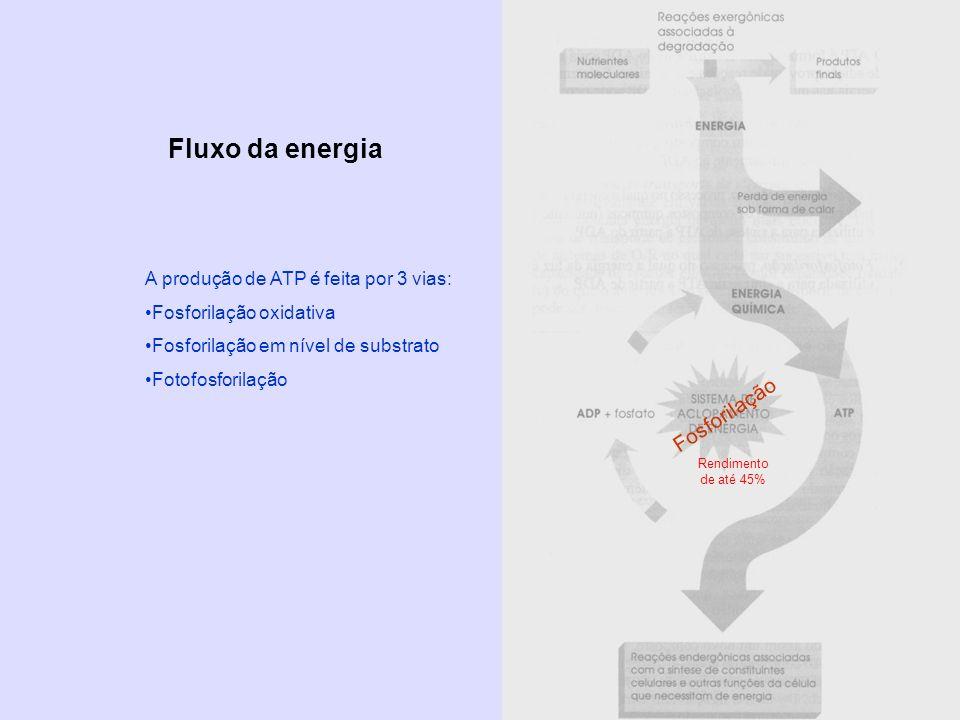 Fluxo da energia Rendimento de até 45% Fosforilação A produção de ATP é feita por 3 vias: Fosforilação oxidativa Fosforilação em nível de substrato Fo