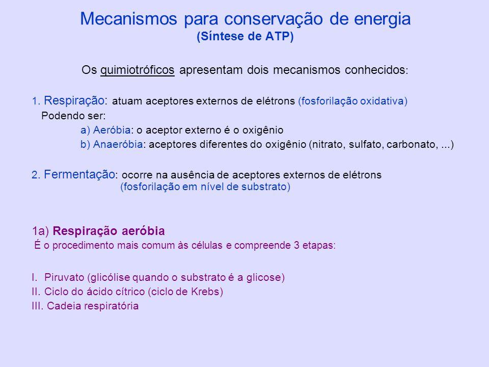 Mecanismos para conservação de energia (Síntese de ATP) Os quimiotróficos apresentam dois mecanismos conhecidos : 1. Respiração: atuam aceptores exter