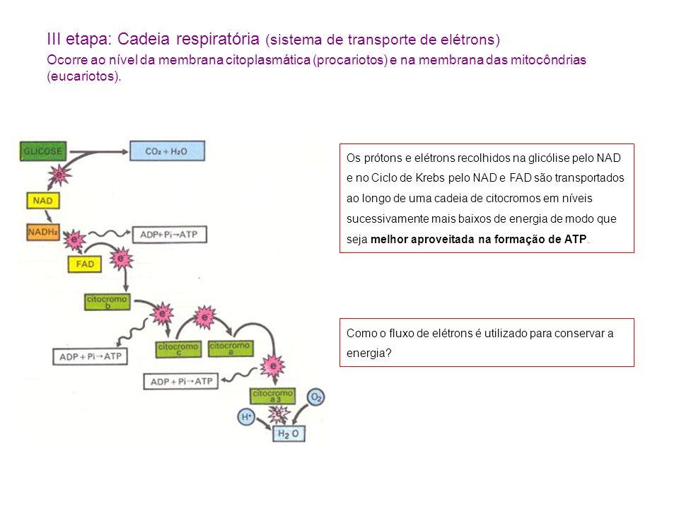 III etapa: Cadeia respiratória (sistema de transporte de elétrons) Ocorre ao nível da membrana citoplasmática (procariotos) e na membrana das mitocônd