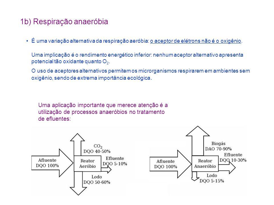 1b) Respiração anaeróbia É uma variação alternativa da respiração aeróbia: o aceptor de elétrons não é o oxigênio. Uma implicação é o rendimento energ