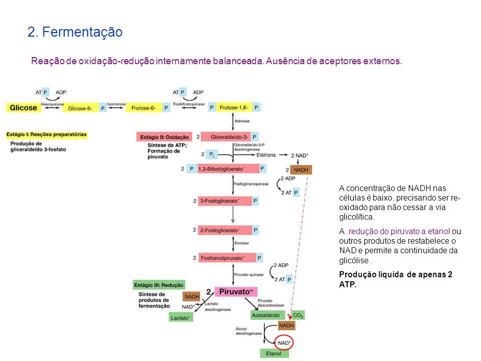 2. Fermentação Reação de oxidação-redução internamente balanceada. Ausência de aceptores externos. A concentração de NADH nas células é baixo, precisa