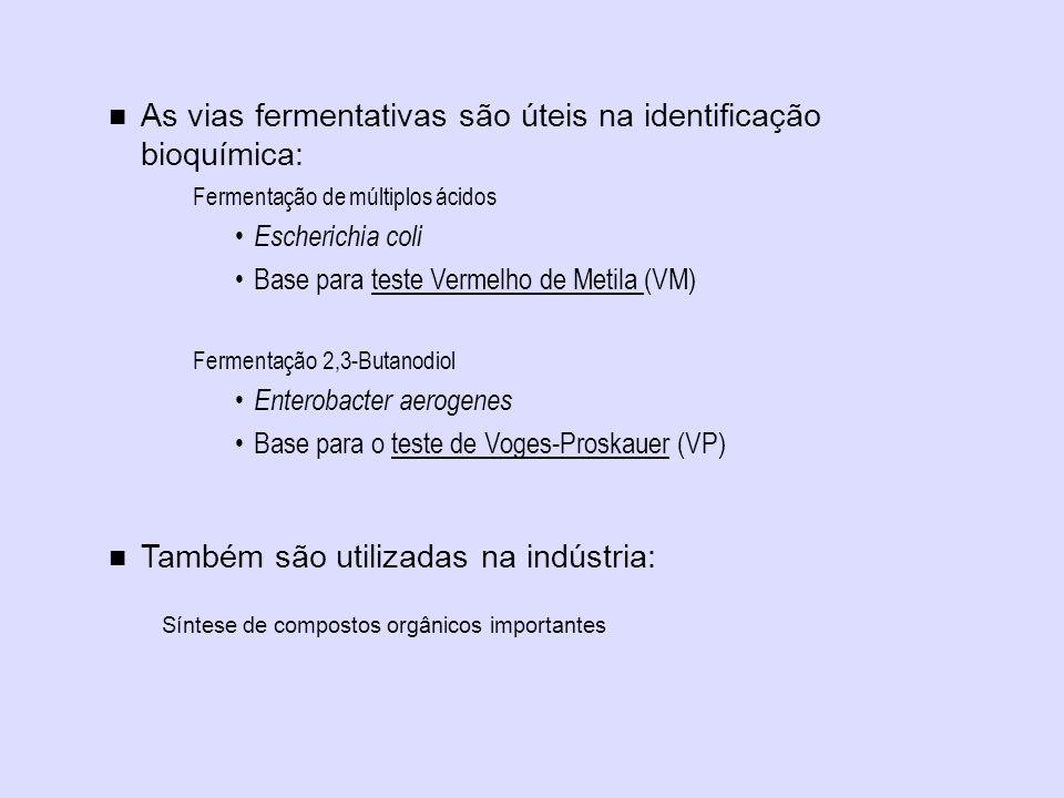 As vias fermentativas são úteis na identificação bioquímica: Fermentação de múltiplos ácidos Escherichia coli Base para teste Vermelho de Metila (VM)
