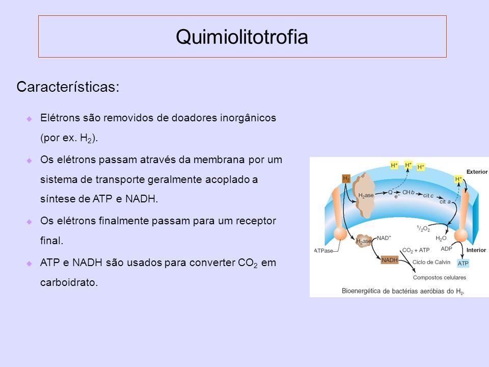 Quimiolitotrofia Características: Elétrons são removidos de doadores inorgânicos (por ex. H 2 ). Os elétrons passam através da membrana por um sistema