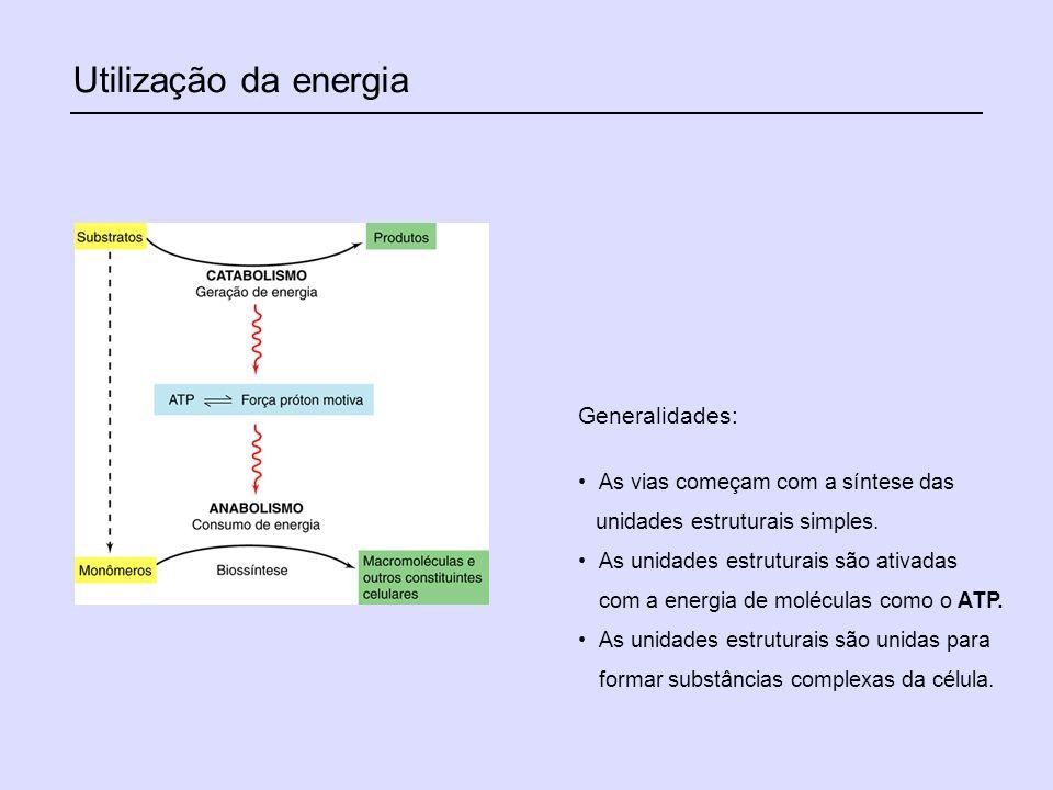 Utilização da energia Generalidades: As vias começam com a síntese das unidades estruturais simples. As unidades estruturais são ativadas com a energi