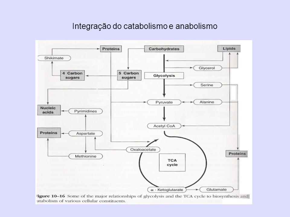 Integração do catabolismo e anabolismo