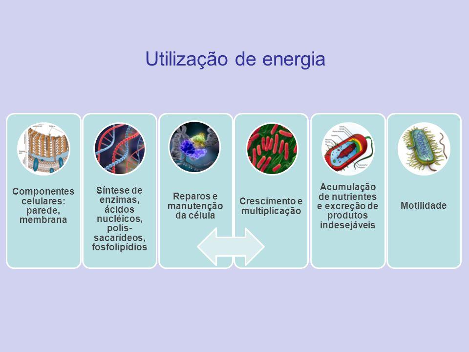Utilização de energia Componentes celulares: parede, membrana Síntese de enzimas, ácidos nucléicos, polis- sacarídeos, fosfolipídios Reparos e manuten