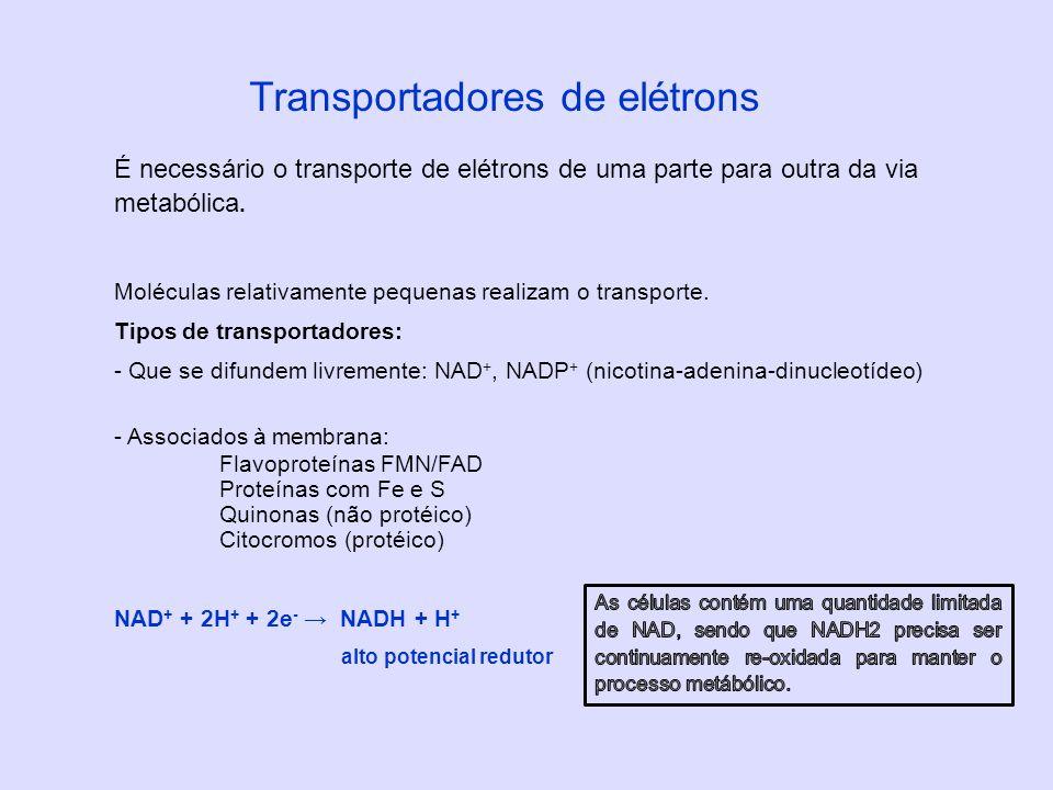 É necessário o transporte de elétrons de uma parte para outra da via metabólica. Moléculas relativamente pequenas realizam o transporte. Tipos de tran