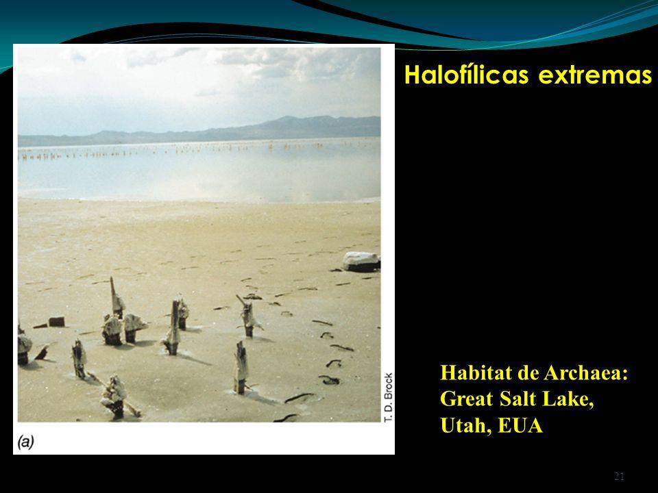 Habitat de Archaea: Great Salt Lake, Utah, EUA Halofílicas extremas 21