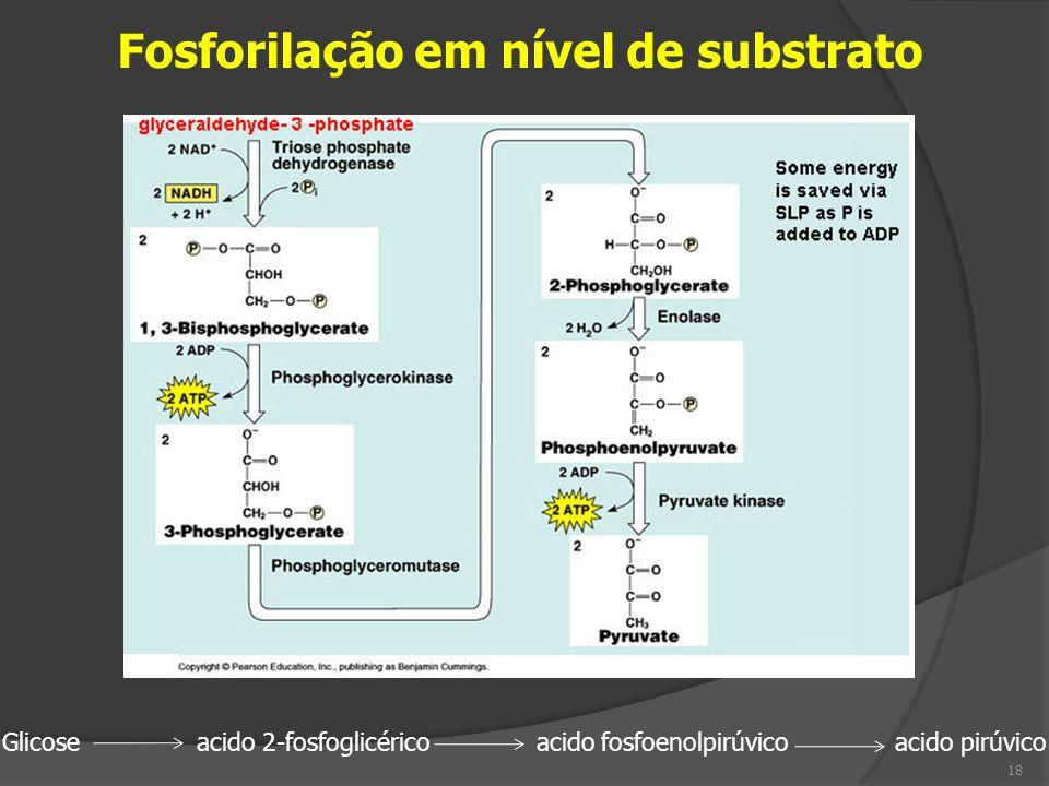 Fosforilação em nível de substrato Glicose acido 2-fosfoglicérico acido fosfoenolpirúvico acido pirúvico 18
