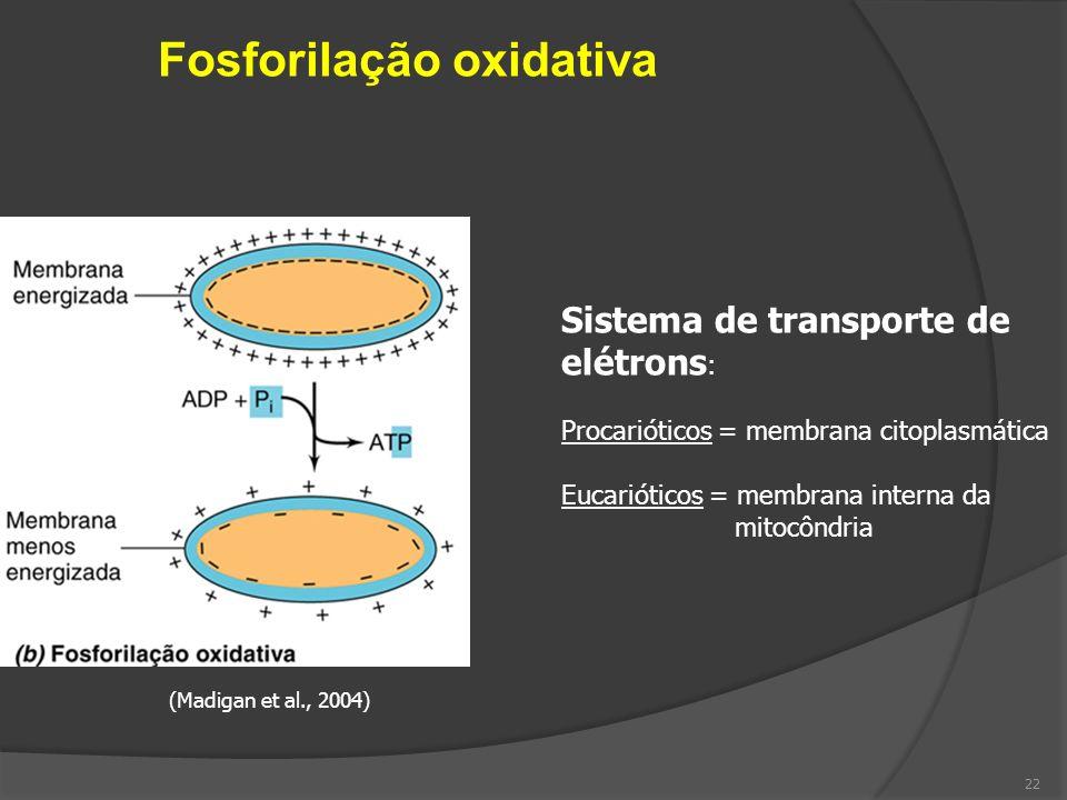 Fosforilação oxidativa (Madigan et al., 2004) Sistema de transporte de elétrons : Procarióticos = membrana citoplasmática Eucarióticos = membrana inte