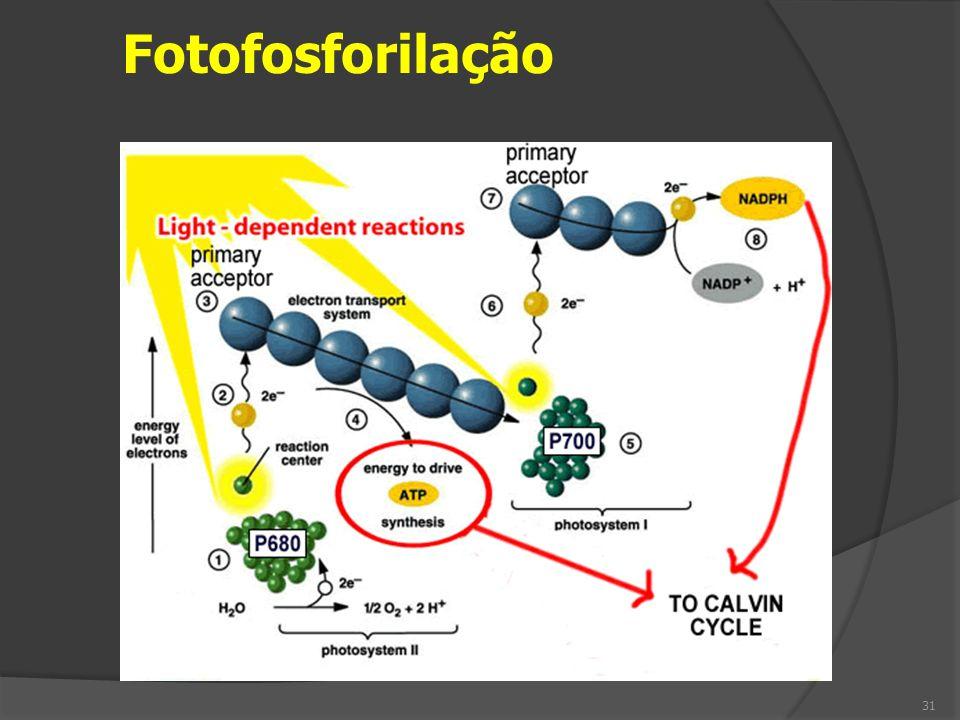 Fotofosforilação 31