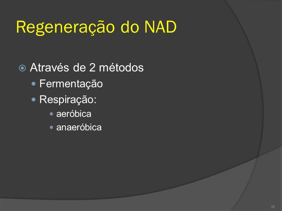 Regeneração do NAD Através de 2 métodos Fermentação Respiração: aeróbica anaeróbica 35
