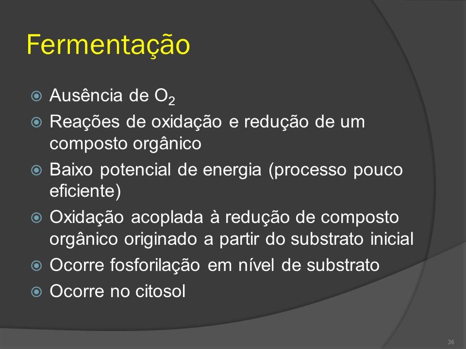 Fermentação Ausência de O 2 Reações de oxidação e redução de um composto orgânico Baixo potencial de energia (processo pouco eficiente) Oxidação acopl