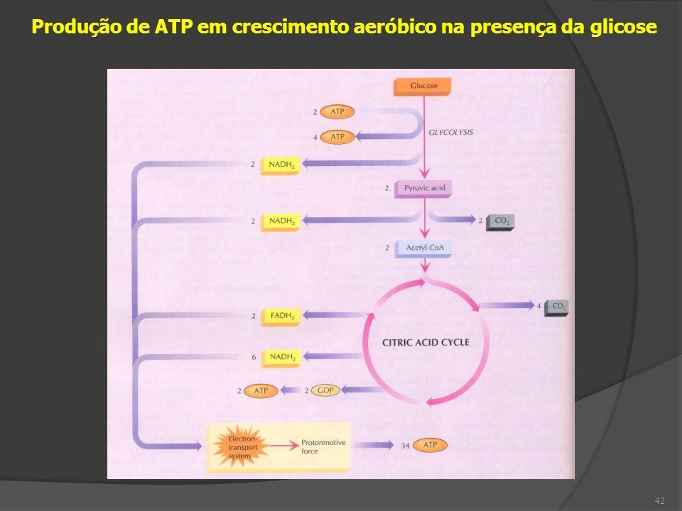 Produção de ATP em crescimento aeróbico na presença da glicose 42