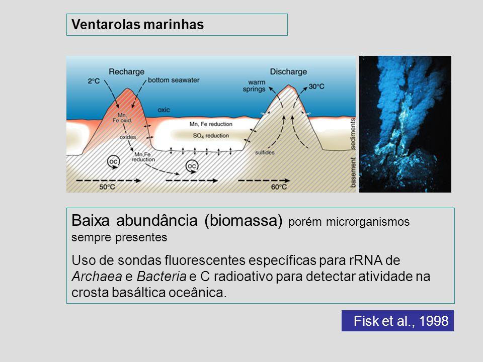 Baixa abundância (biomassa) porém microrganismos sempre presentes Uso de sondas fluorescentes específicas para rRNA de Archaea e Bacteria e C radioati