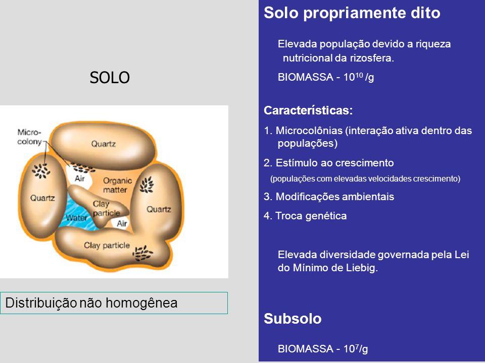 SOLO Solo propriamente dito Elevada população devido a riqueza nutricional da rizosfera. BIOMASSA - 10 10 /g Características: 1. Microcolônias (intera