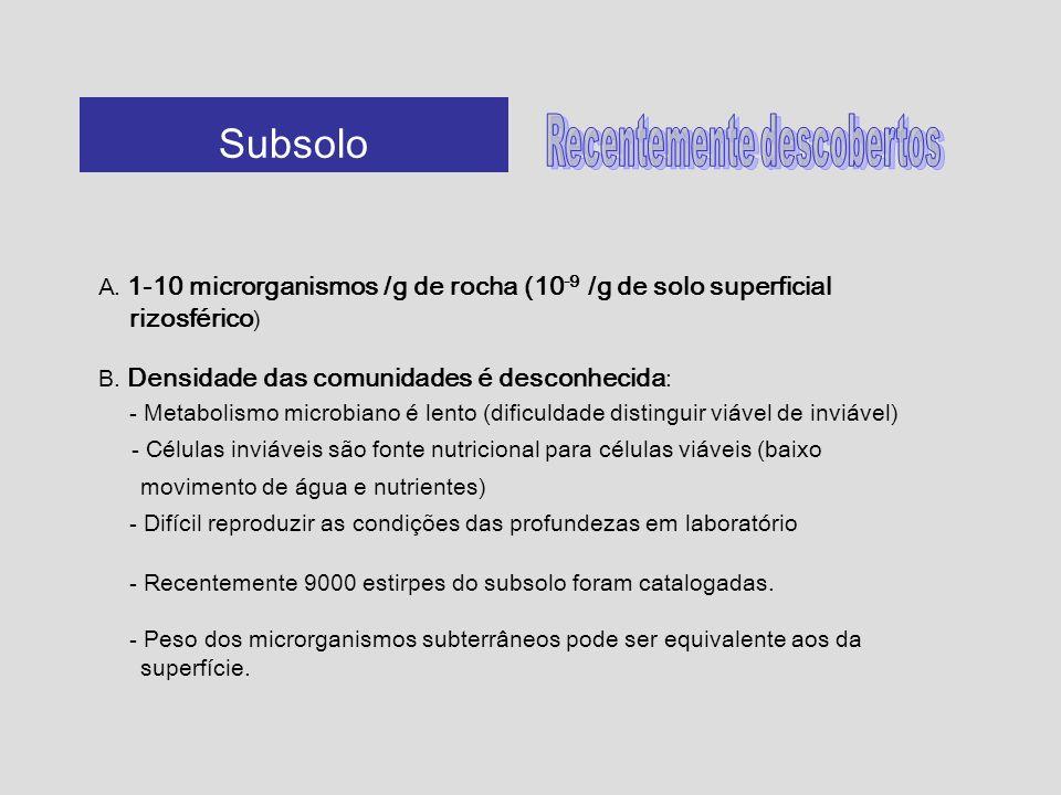 A. 1-10 microrganismos /g de rocha (10 -9 /g de solo superficial rizosférico ) B. Densidade das comunidades é desconhecida : - Metabolismo microbiano