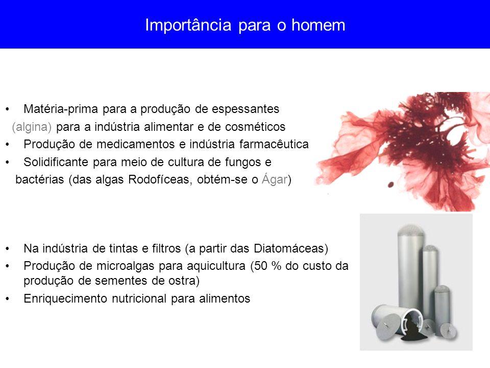 Importância para o homem Matéria-prima para a produção de espessantes (algina) para a indústria alimentar e de cosméticos Produção de medicamentos e i