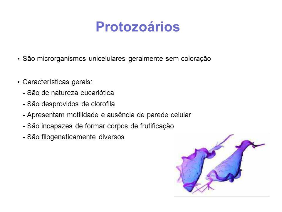 Protozoários São microrganismos unicelulares geralmente sem coloração Características gerais: - São de natureza eucariótica - São desprovidos de clorofila - Apresentam motilidade e ausência de parede celular - São incapazes de formar corpos de frutificação - São filogeneticamente diversos