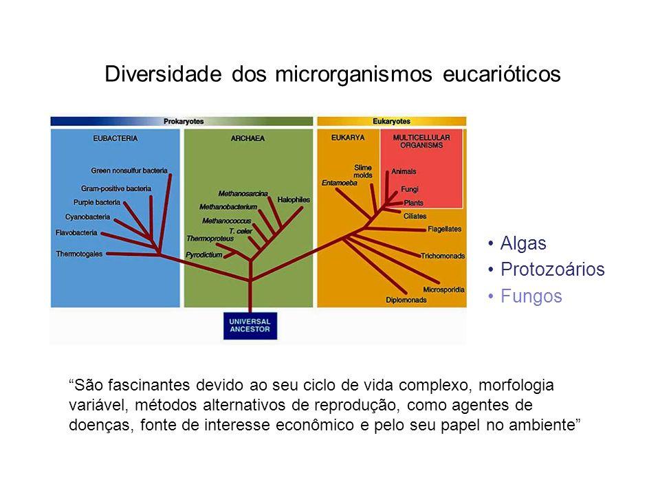 Diversidade dos microrganismos eucarióticos Algas Protozoários Fungos São fascinantes devido ao seu ciclo de vida complexo, morfologia variável, métodos alternativos de reprodução, como agentes de doenças, fonte de interesse econômico e pelo seu papel no ambiente