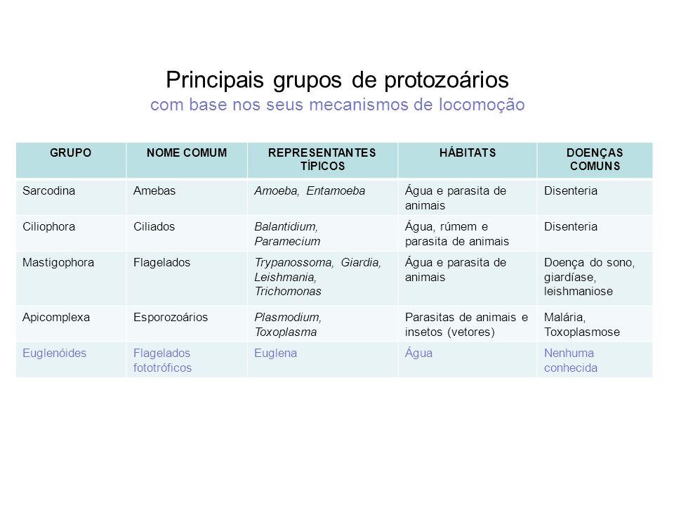 Principais grupos de protozoários com base nos seus mecanismos de locomoção GRUPONOME COMUMREPRESENTANTES TÍPICOS HÁBITATSDOENÇAS COMUNS SarcodinaAmeb