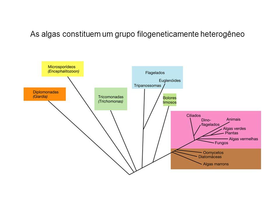 As algas constituem um grupo filogeneticamente heterogêneo
