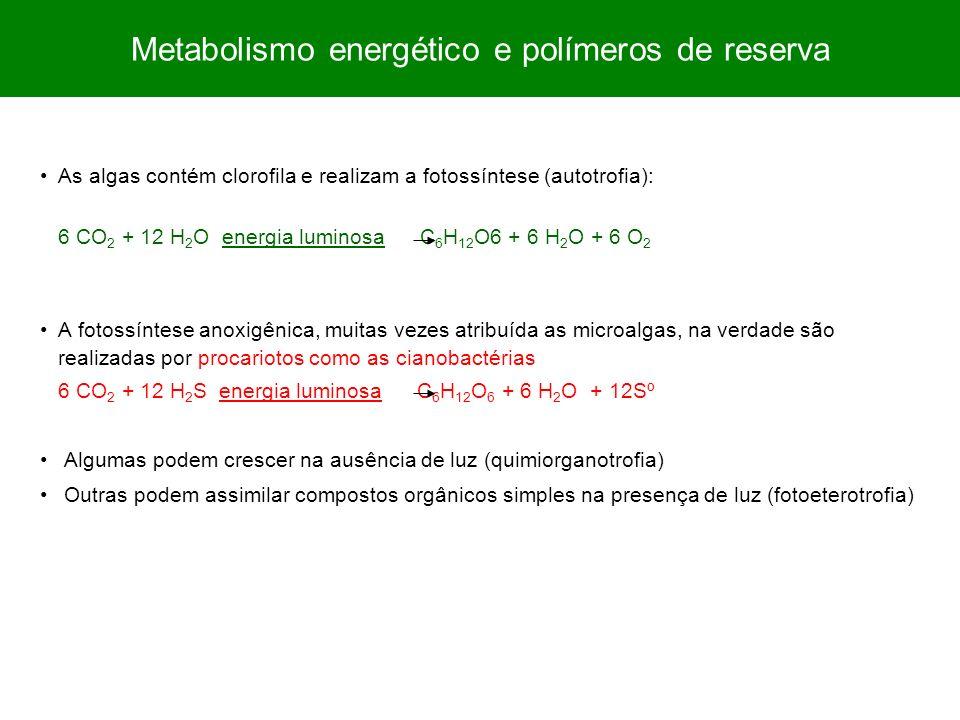 As algas contém clorofila e realizam a fotossíntese (autotrofia): 6 CO 2 + 12 H 2 O energia luminosa C 6 H 12 O6 + 6 H 2 O + 6 O 2 A fotossíntese anox
