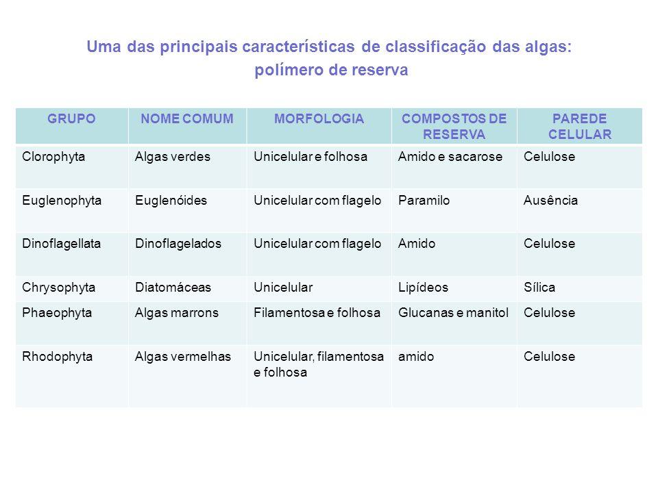 GRUPONOME COMUMMORFOLOGIACOMPOSTOS DE RESERVA PAREDE CELULAR ClorophytaAlgas verdesUnicelular e folhosaAmido e sacaroseCelulose EuglenophytaEuglenóide