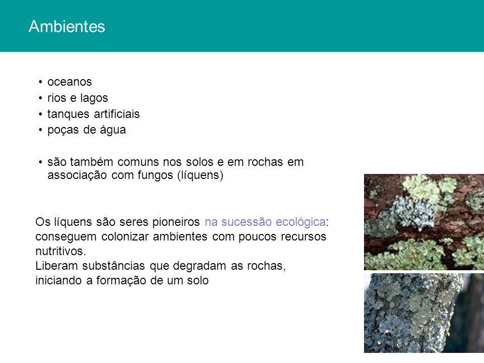 Ambientes oceanos rios e lagos tanques artificiais poças de água são também comuns nos solos e em rochas em associação com fungos (líquens) Os líquens são seres pioneiros na sucessão ecológica: conseguem colonizar ambientes com poucos recursos nutritivos.