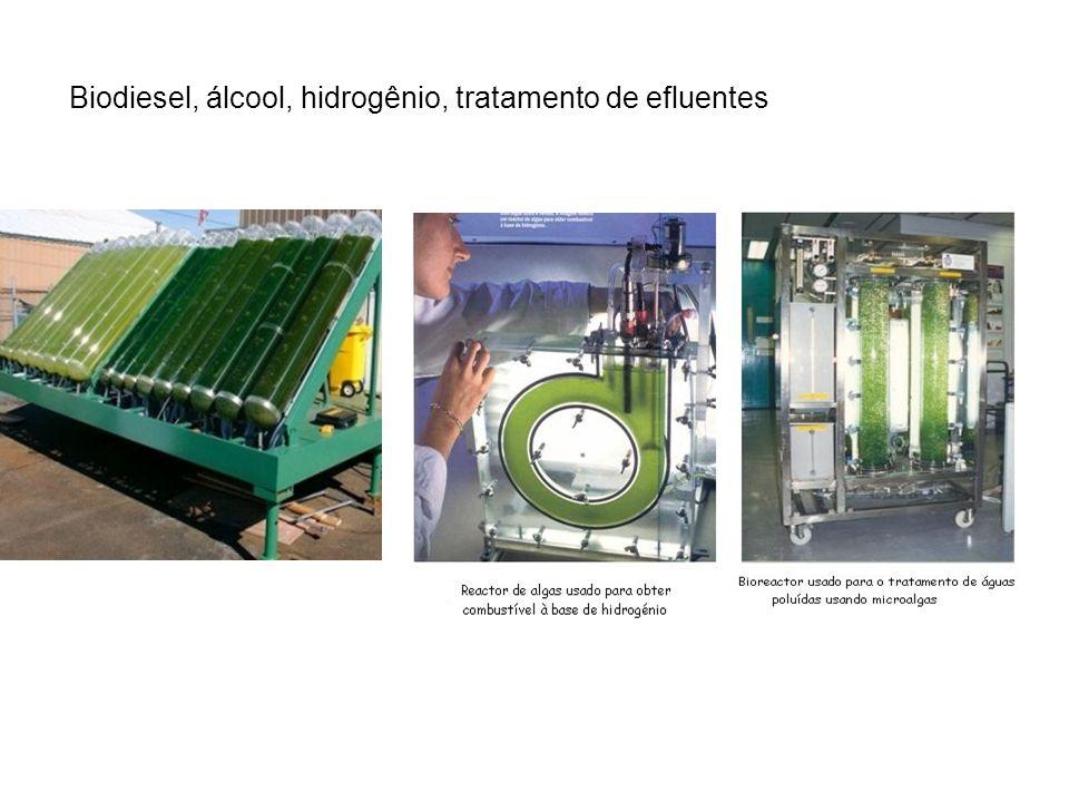 Biodiesel, álcool, hidrogênio, tratamento de efluentes