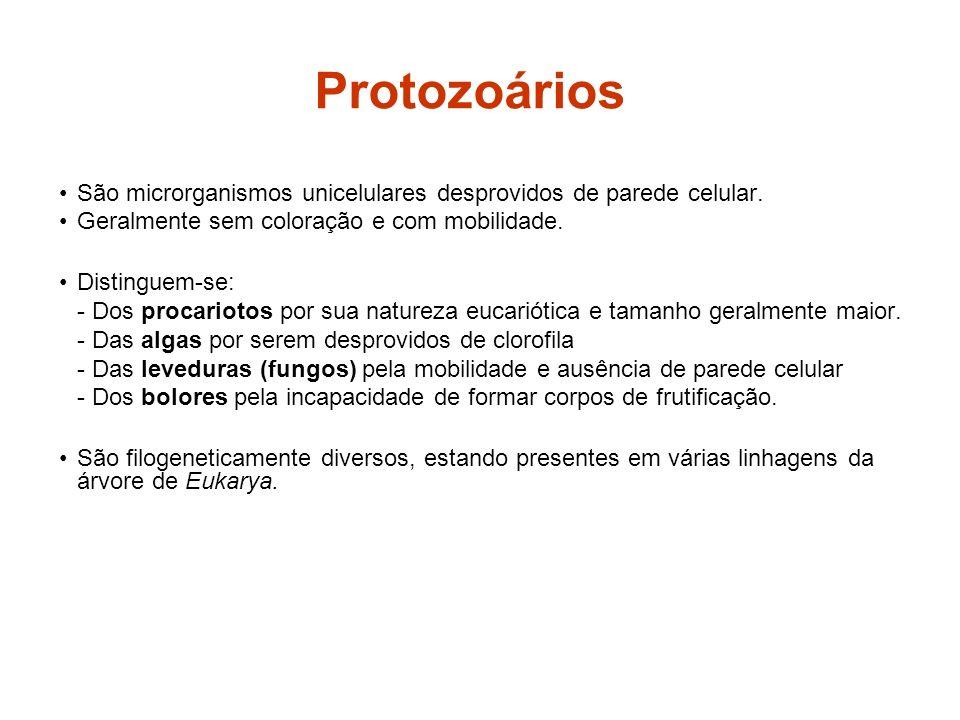 Protozoários São microrganismos unicelulares desprovidos de parede celular. Geralmente sem coloração e com mobilidade. Distinguem-se: - Dos procarioto