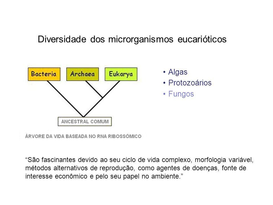 Diversidade dos microrganismos eucarióticos Algas Protozoários Fungos São fascinantes devido ao seu ciclo de vida complexo, morfologia variável, métod
