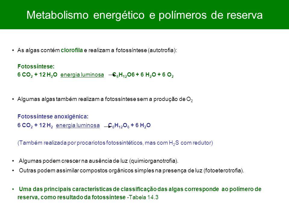 As algas contém clorofila e realizam a fotossíntese (autotrofia): Fotossíntese: 6 CO 2 + 12 H 2 O energia luminosa C 6 H 12 O6 + 6 H 2 O + 6 O 2 Algum