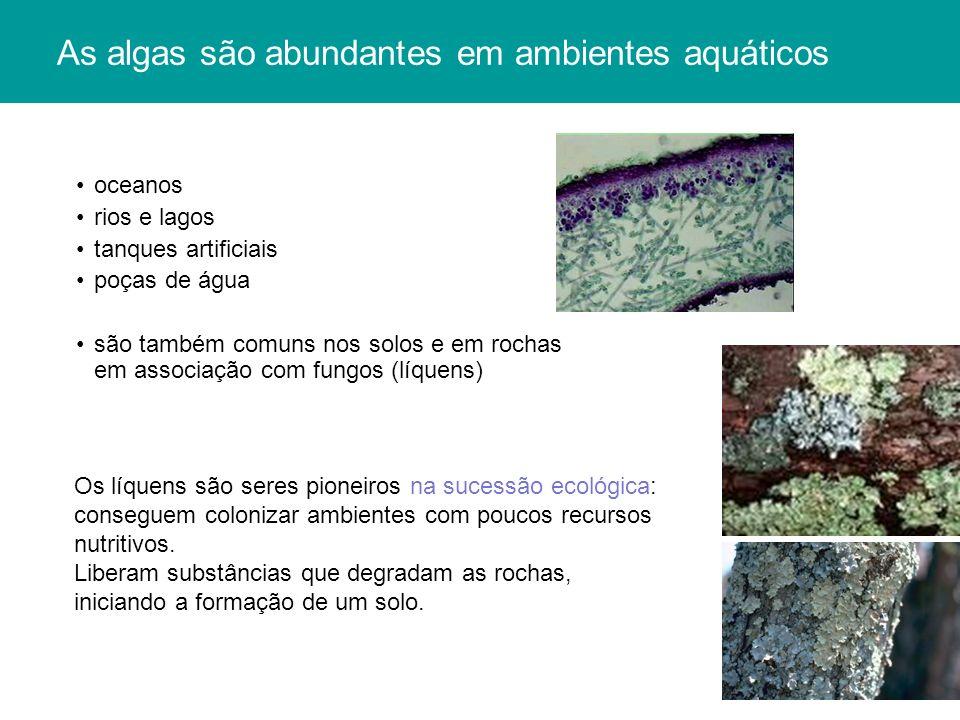 As algas são abundantes em ambientes aquáticos oceanos rios e lagos tanques artificiais poças de água são também comuns nos solos e em rochas em assoc