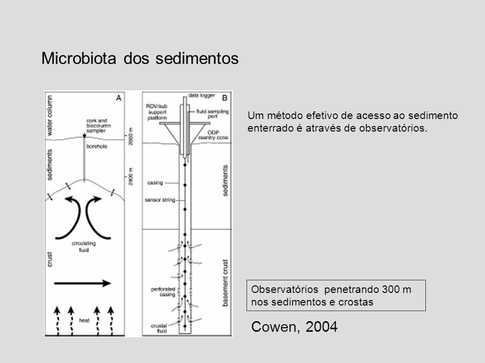 Microbiota dos sedimentos Cowen, 2004 Observatórios penetrando 300 m nos sedimentos e crostas Um método efetivo de acesso ao sedimento enterrado é atr