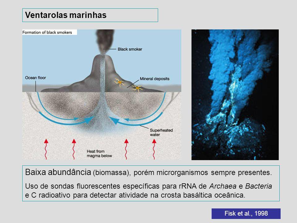 Baixa abundância (biomassa), porém microrganismos sempre presentes. Uso de sondas fluorescentes específicas para rRNA de Archaea e Bacteria e C radioa
