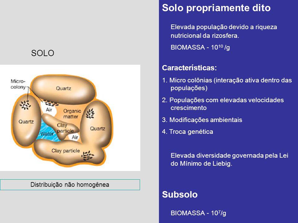 SOLO Solo propriamente dito Elevada população devido a riqueza nutricional da rizosfera. BIOMASSA - 10 10 /g Características: 1. Micro colônias (inter
