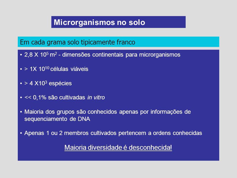 Microrganismos no solo Em cada grama solo tipicamente franco 2,8 X 10 5 m 2 - dimensões continentais para microrganismos > 1X 10 10 células viáveis >