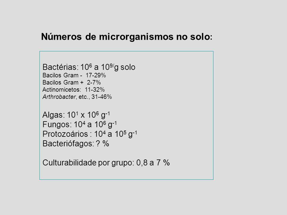 Bactérias: 10 6 a 10 9/ g solo Bacilos Gram - 17-29% Bacilos Gram + 2-7% Actinomicetos: 11-32% Arthrobacter, etc., 31-46% Algas: 10 1 x 10 6 g -1 Fung