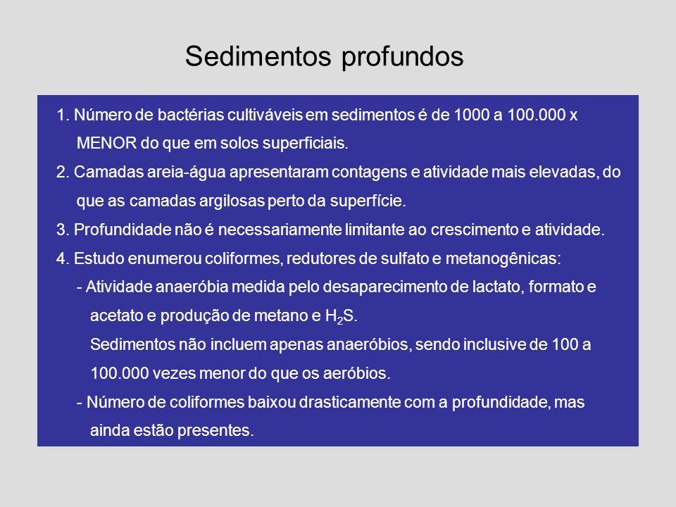 Sedimentos profundos 1. Número de bactérias cultiváveis em sedimentos é de 1000 a 100.000 x MENOR do que em solos superficiais. 2. Camadas areia-água
