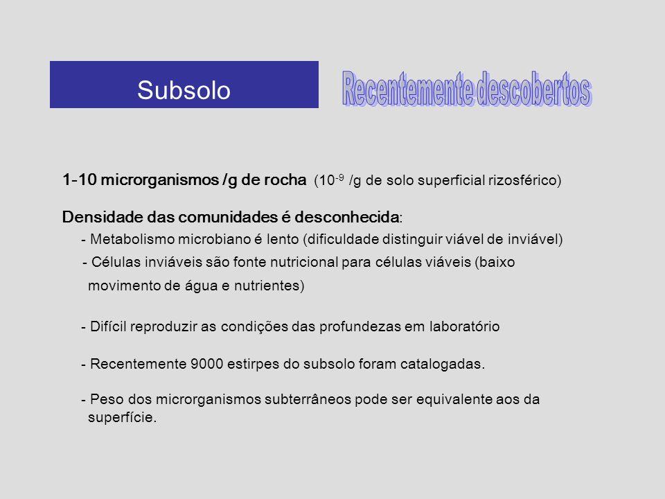 1-10 microrganismos /g de rocha (10 -9 /g de solo superficial rizosférico) Densidade das comunidades é desconhecida : - Metabolismo microbiano é lento