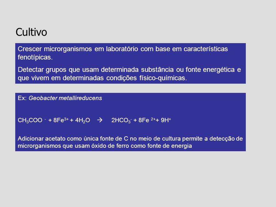 Ex: Geobacter metallireducens CH 3 COO - + 8Fe 3+ + 4H 2 O 2HCO 3 - + 8Fe 2+ + 9H + Adicionar acetato como única fonte de C no meio de cultura permite