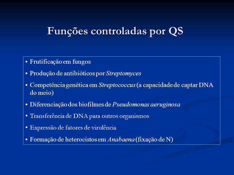 Funções controladas por QS Frutificação em fungos Produção de antibióticos por Streptomyces Competência genética em Streptococcus (a capacidade de cap